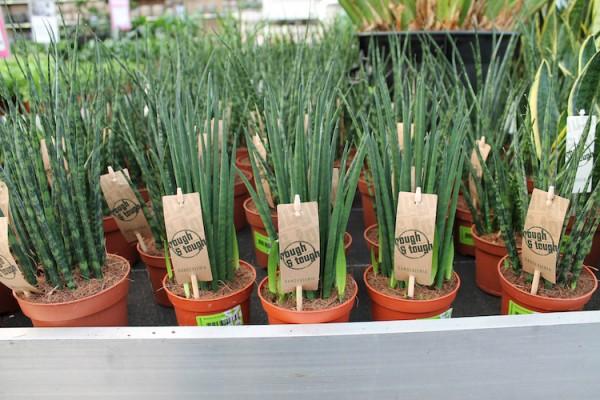 Etikettenstäbe aus Bambus